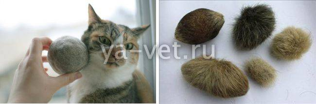 Комки шерсти в желудке у кошки: симптомы и способы выведения