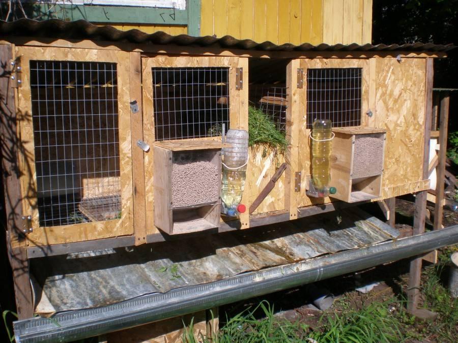 Разведение кроликов в домашних условиях для начинающих - условия содержания