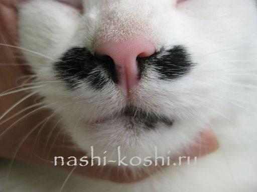 У кошки сухой нос
