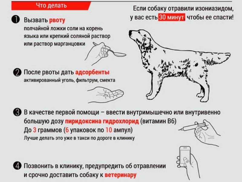 Язва желудка у кошки: лечение, питание и профилактика