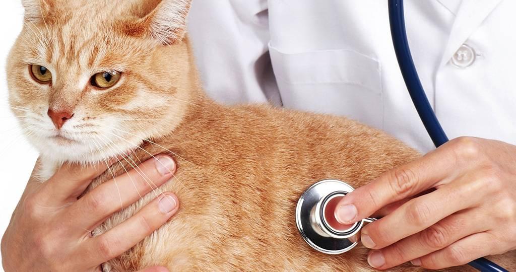 Гастрит у кошек: причины возникновения, симптомы, диагностика, лечение