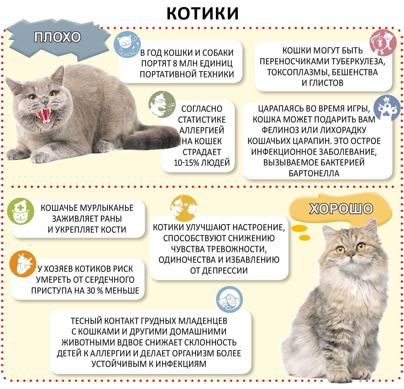Вязка кошек и котов