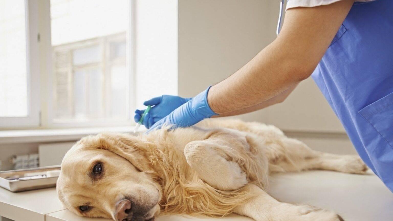 Усыпление животных на дому в спб | лицензировано | цены, недорого