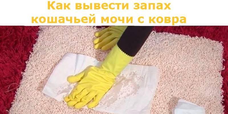 Как убрать кошачий запах в квартире, что делать, если кот пометил в доме, как удалить аромат меток кошки: советы и рецепты
