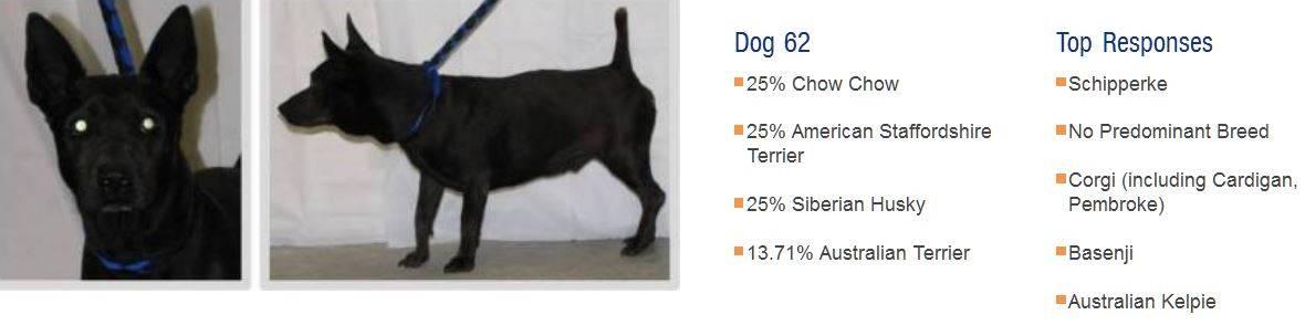 Как узнать породу собаки по ее внешнему виду или по фото: несколько проверенных способов