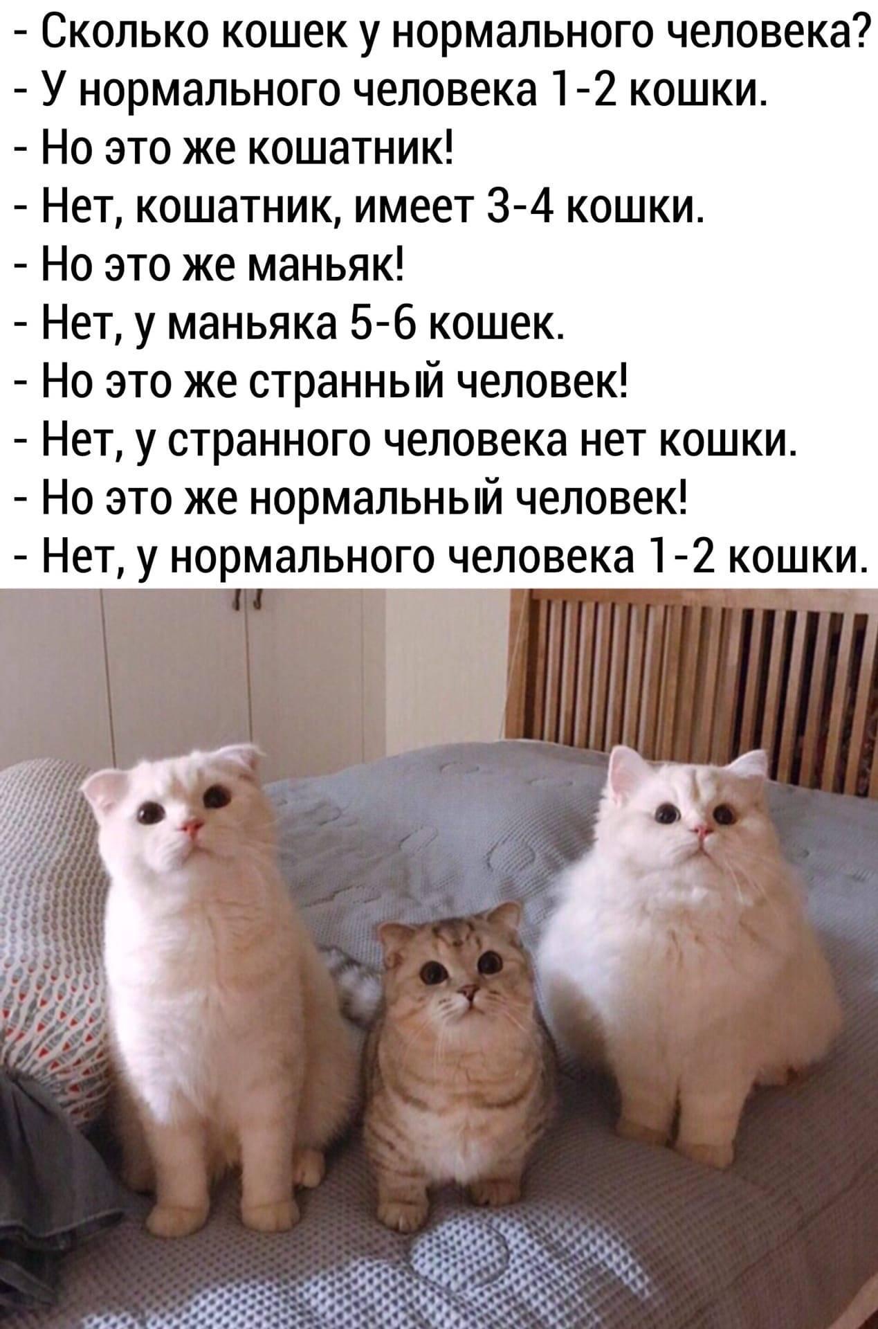 3 главных причины завести вторую кошку