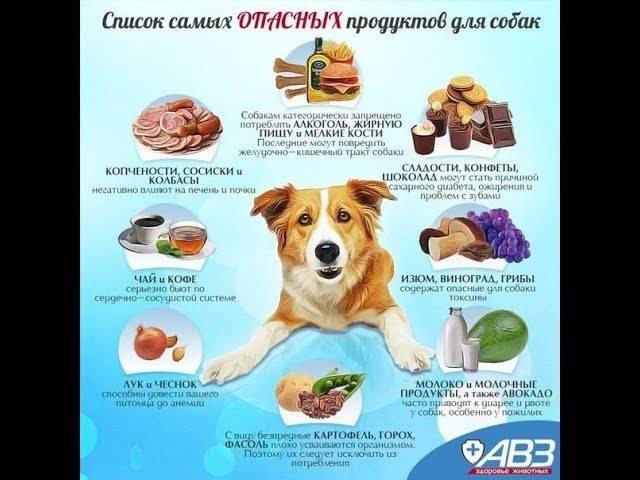 Сухой корм и мясо собакам: можно ли давать вместе?