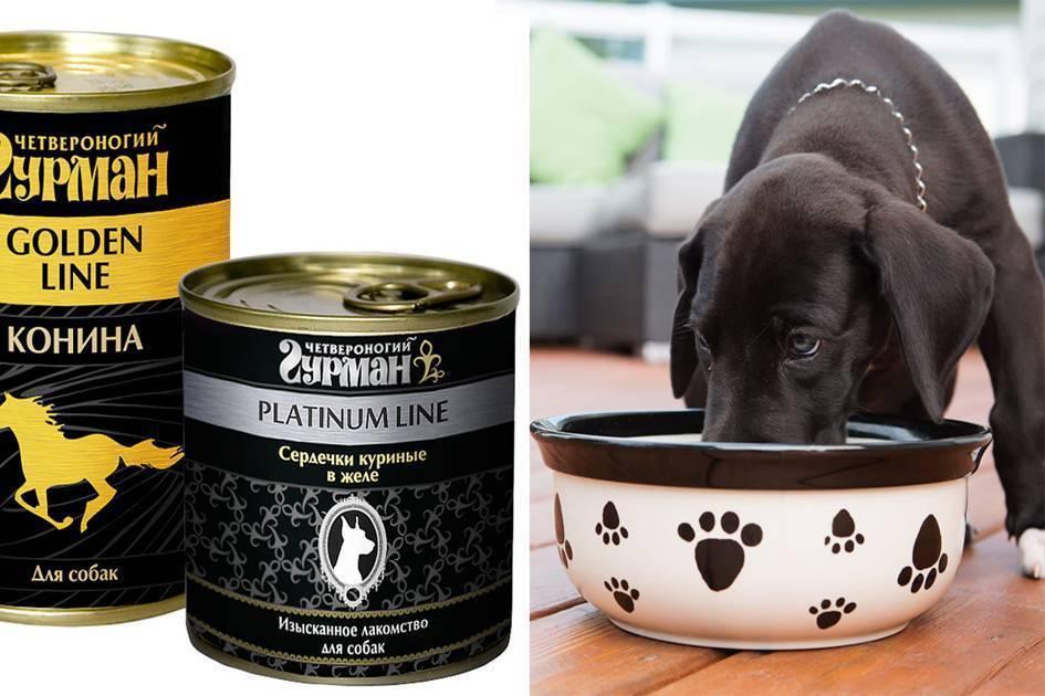 Классы кормов для собак: сравнения, список марок, рейтинг | «дай лапу»