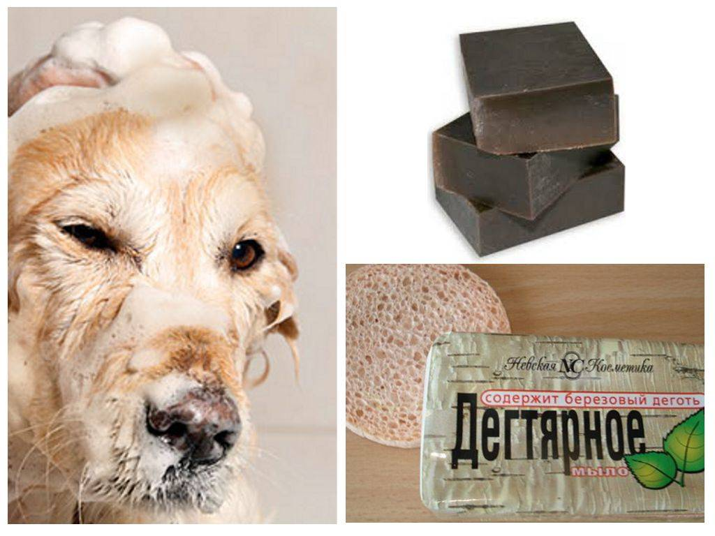 Можно ли мыть собаку мылом?