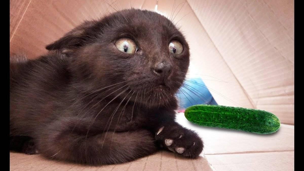 Как насильно покормить кота? кот не ест.