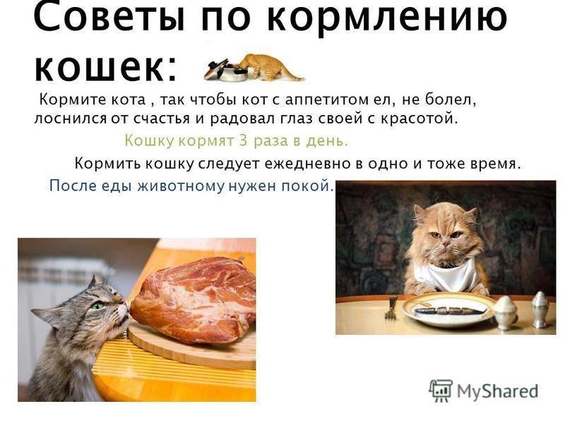 Как правильно кормить кошек: советы экспертов