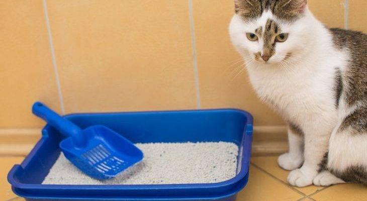 Наполнитель для кошачьего туалета: варианты какой лучше выбрать