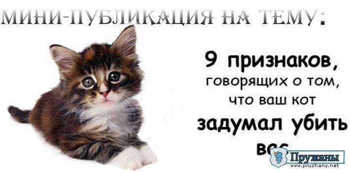 12 признаков того, что ваш кот любит вас