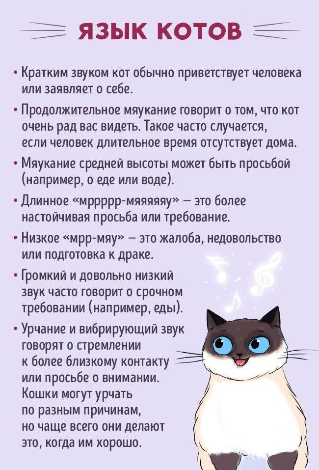 Описание кошачьего языка: существует ли разговорник и как понять что говорит кот