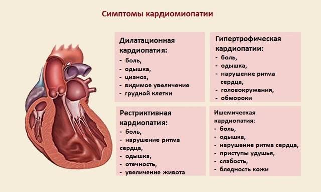 Что делать, если у кота кардиомиопатия