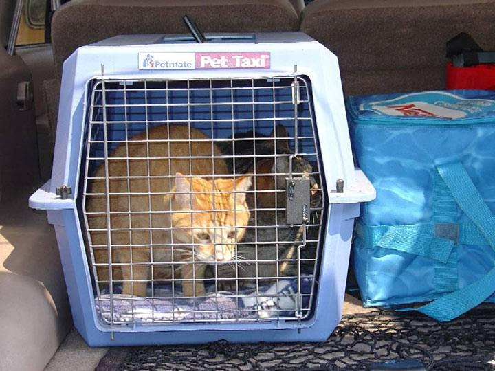 Как перевозить кота или собаку в машине правильно