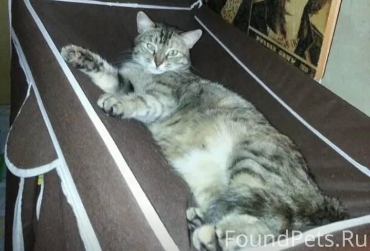 Питомник шотландских вислоухих кошек unicon г. санкт-петербург. шотландские вислоухие котята.