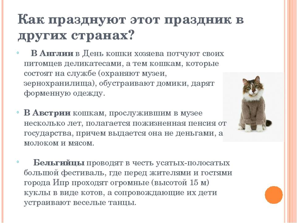 Всемирный день кошек и котов 2018   какого числа, история, когда будет