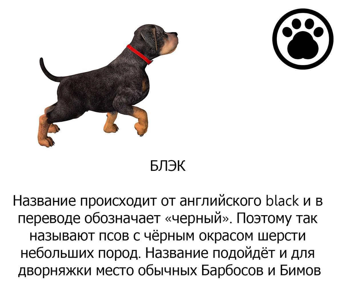 Клички для собак-мальчиков маленьких пород: прикольные и красивые имена, которыми можно назвать щенков мелких пород