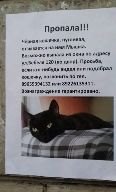 Поверья и приметы про кошек | корки.lol