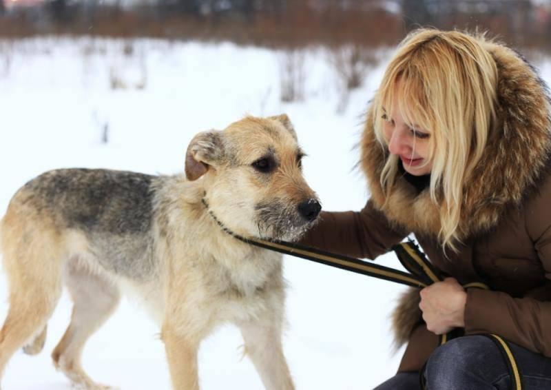 Как показать собаке, что ты главный: простые но верные действия