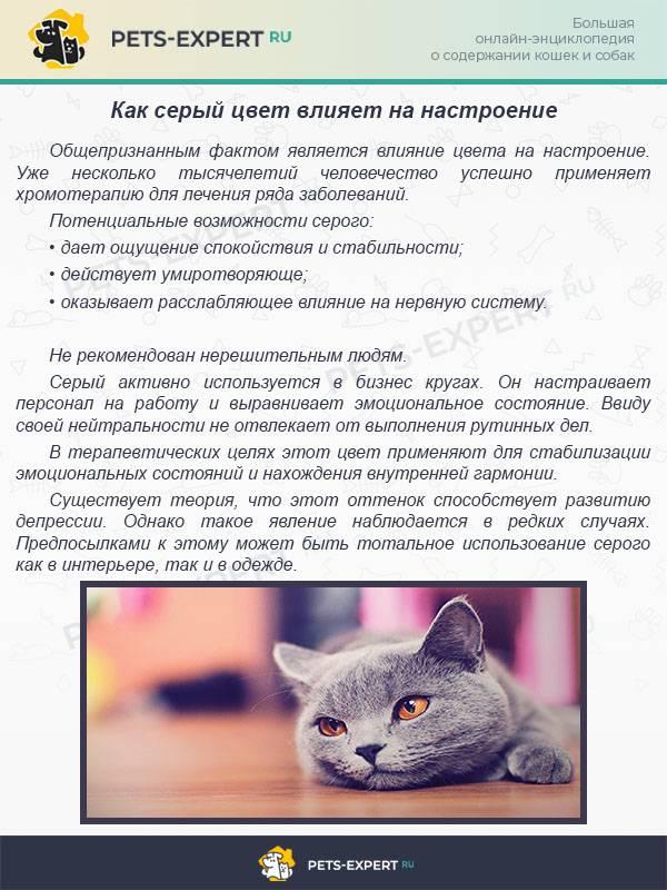 Как назвать серого котенка мальчика: клички, имена