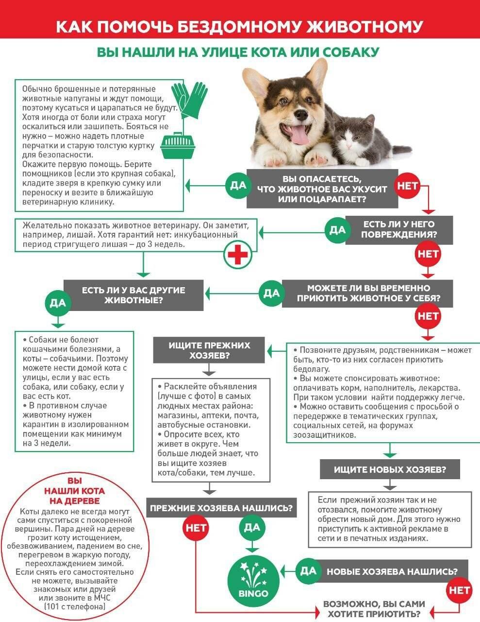 6 эффективных способов помочь бездомным животным - лайфхакер