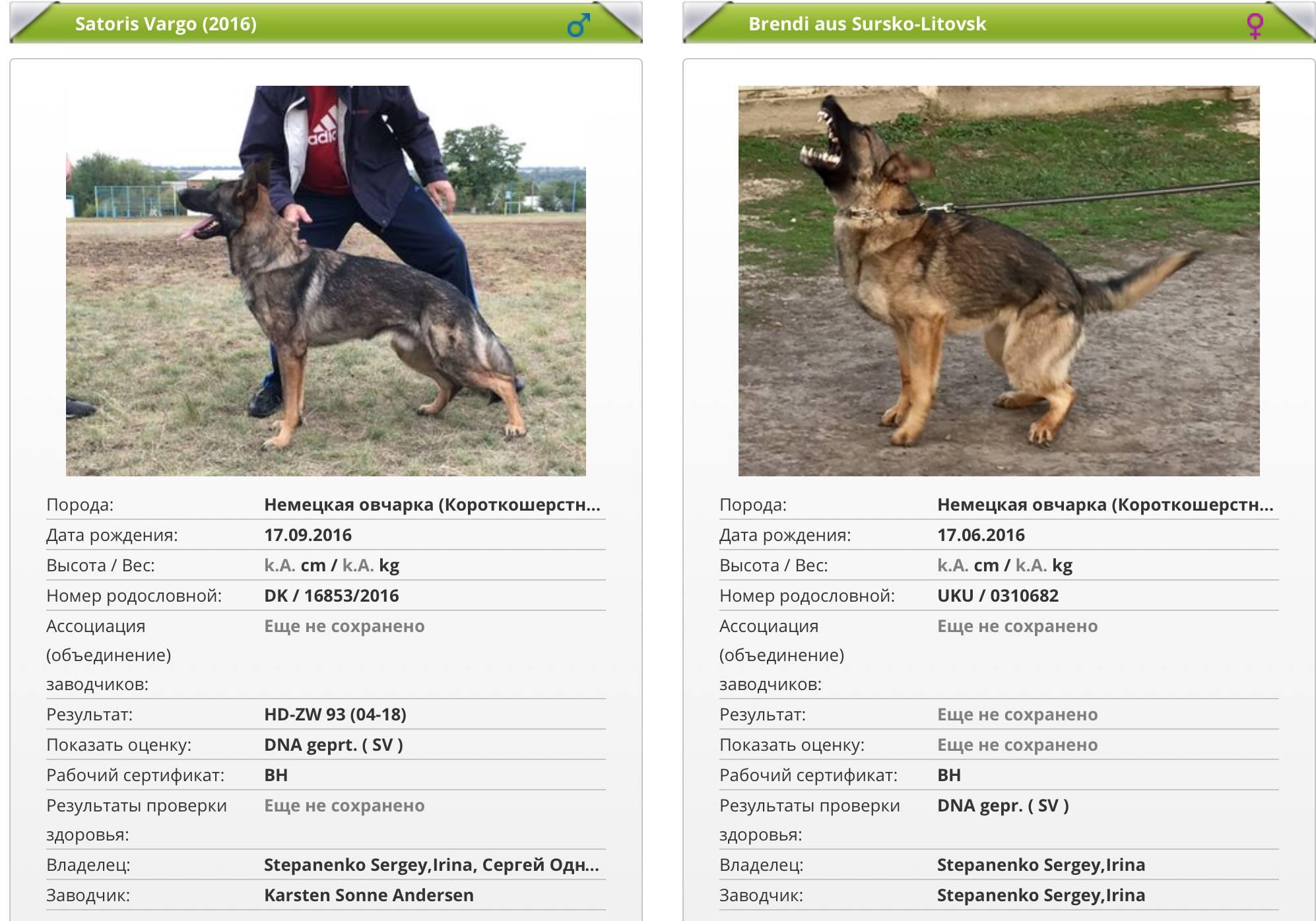 Вес немецкой овчарки по месяцам: таблица сколько весит щенок и взрослая собака, а также до какого возраста растут питомцы