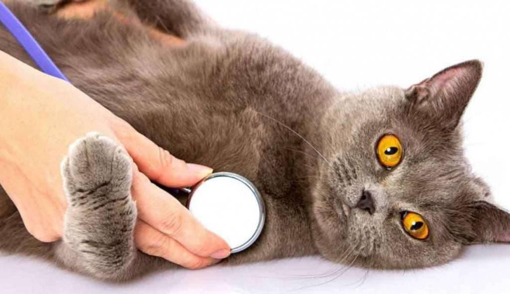 Пищевое отравление у кошек