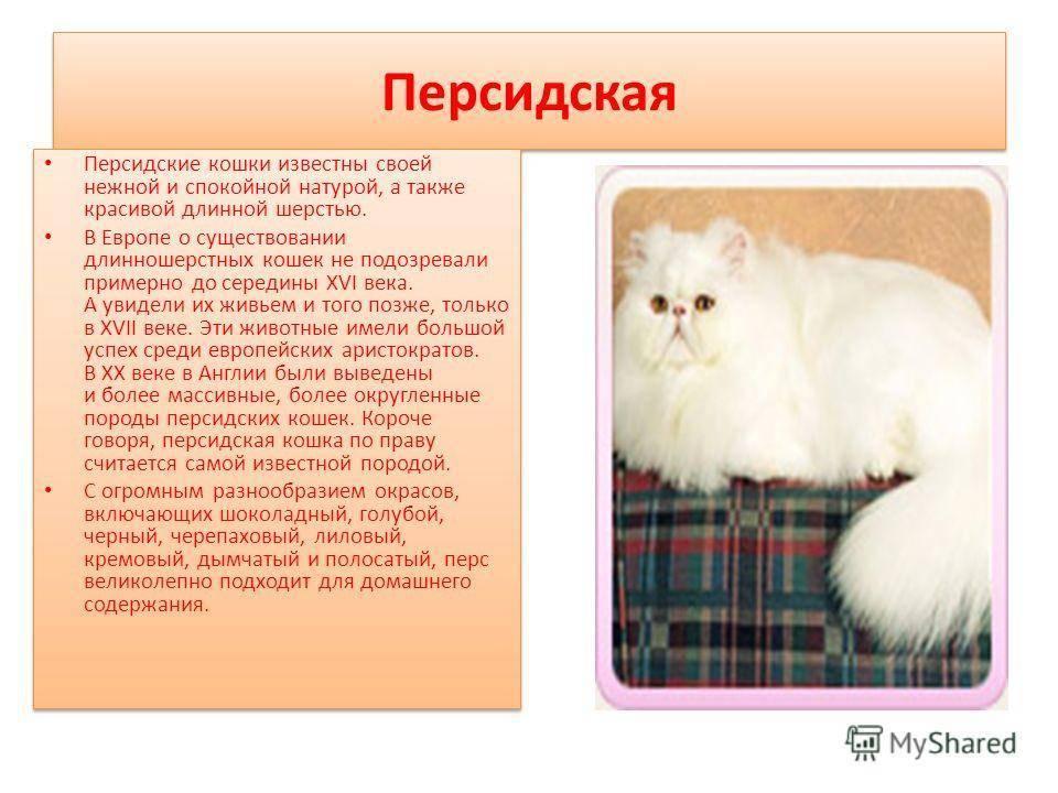 Особенности невской маскарадной кошки: характер, достоинства и недостатки, отзывы