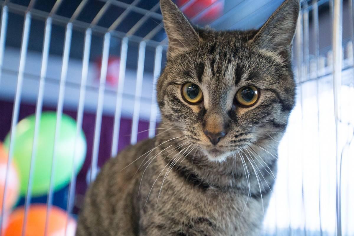 Содержание кошек в домашних условиях: как содержать котенка или взрослого кота в квартире?