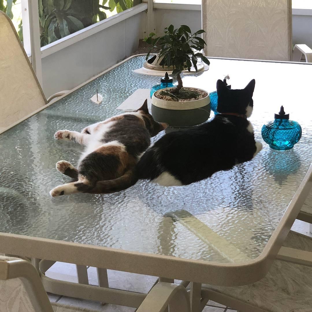 Как отучить кошку лазить по столам: 6 способов