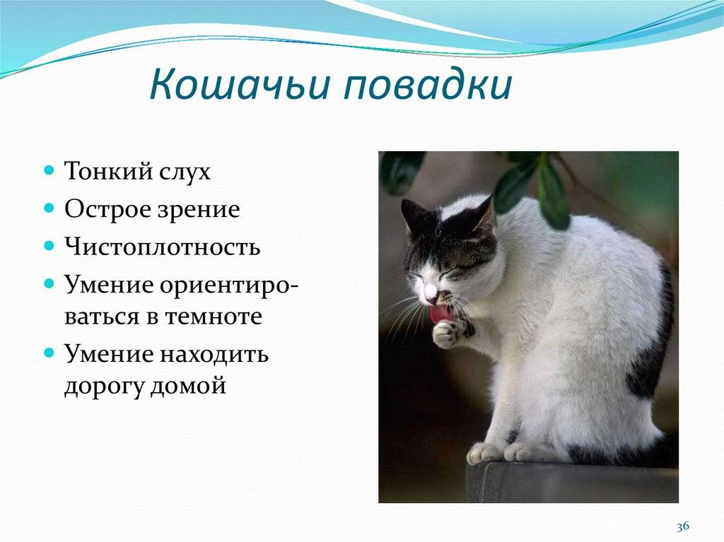 Как понять психологию кошки по её поведению