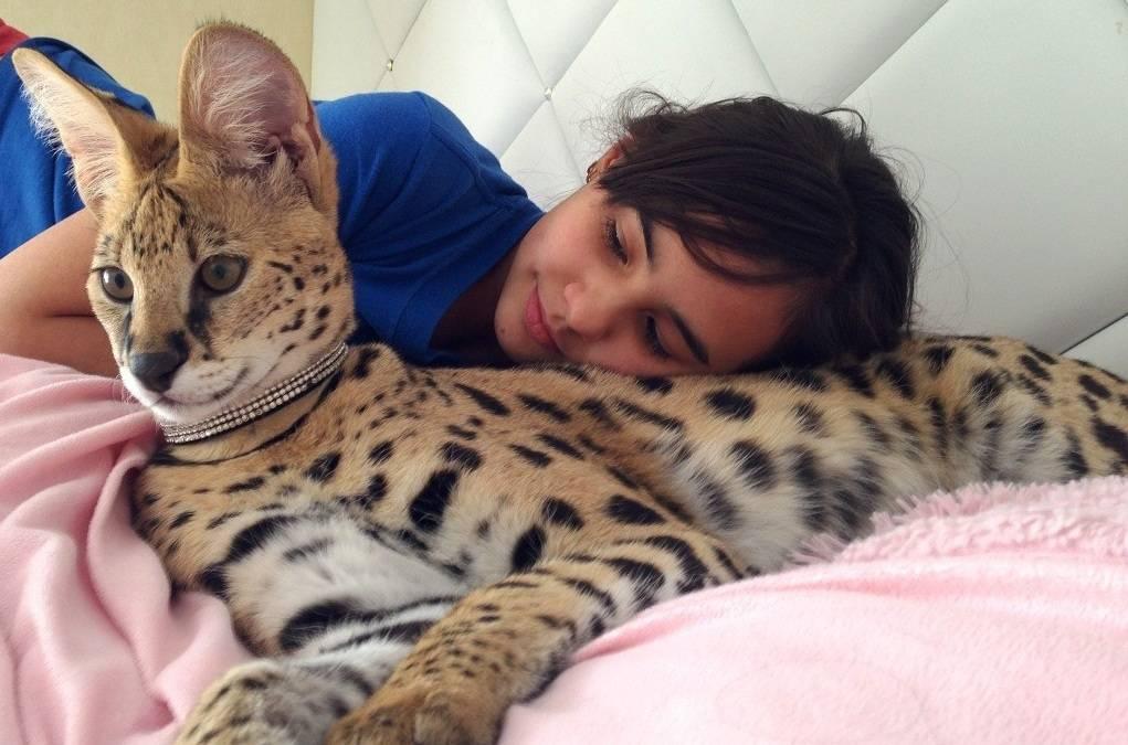 Кошки и коты — самые популярные животные?