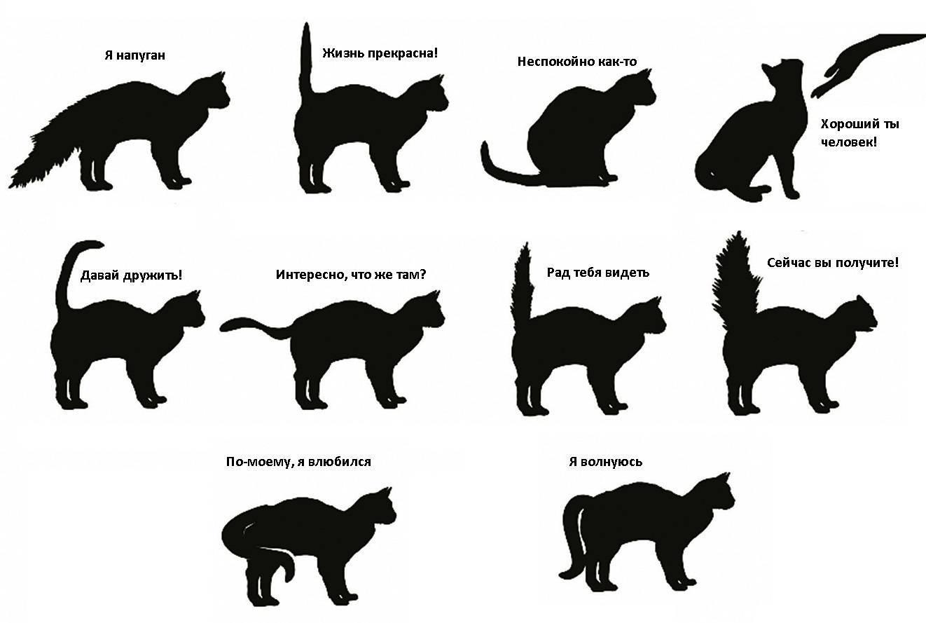 15 проблем в поведении и содержании кошек: советы специалистов: причины и рекомендации