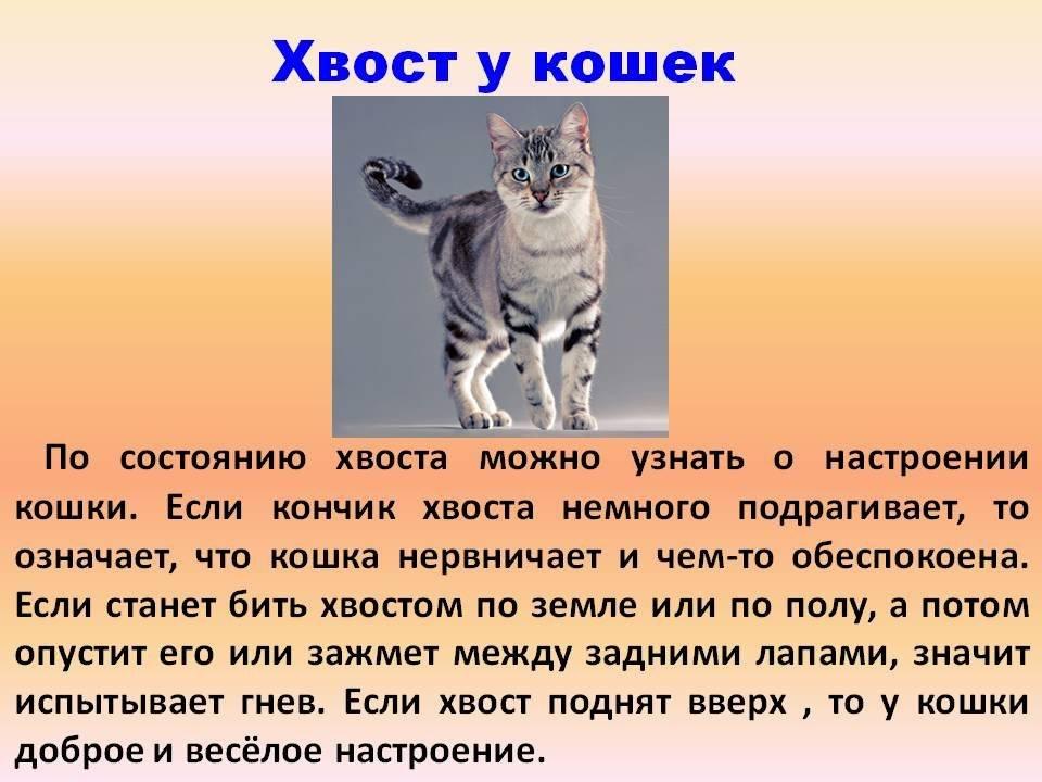 Кошка стала проявлять агрессию: что делать, причины, как успокоить