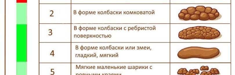"""Метеоризм у собак. ветеринарная клиника """"зоостатус"""""""