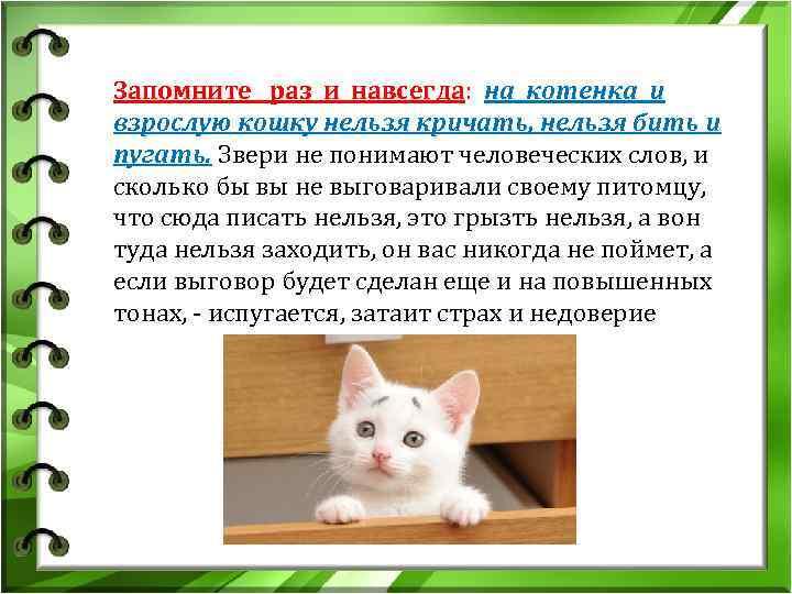 4 действия, которые нельзя делать в присутствии кошки | gafki.ru | яндекс дзен