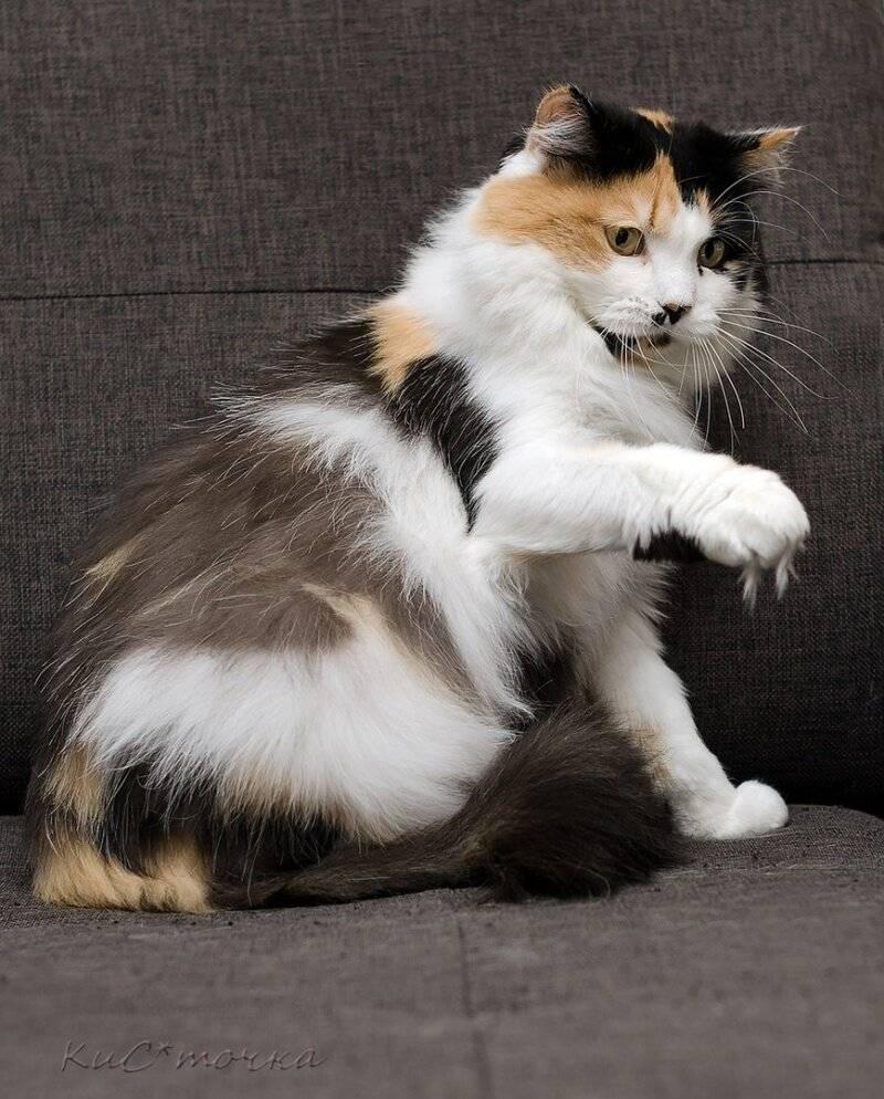 Рыжий персидский кот (16 фото): характеристика, особенности ухода за взрослой особью и котенком