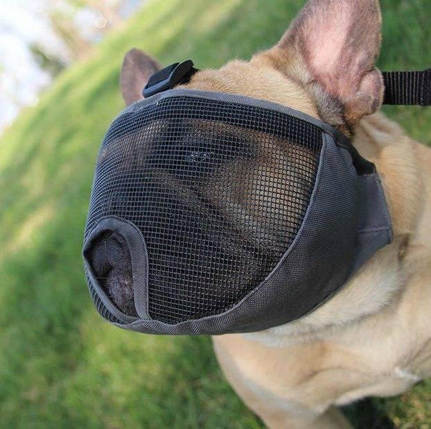 Одежда для французского бульдога своими руками: снятие мерок, построение выкройки, пошив - все о собаках маленьких пород