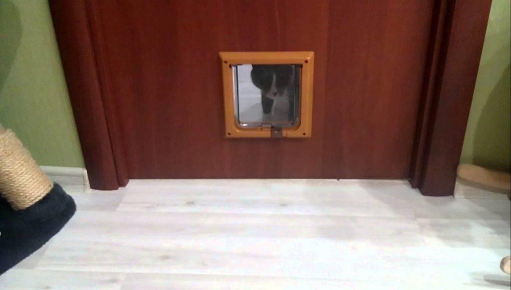 Дверь для кошки: 115 фото, советы по выбору монтажу и установке
