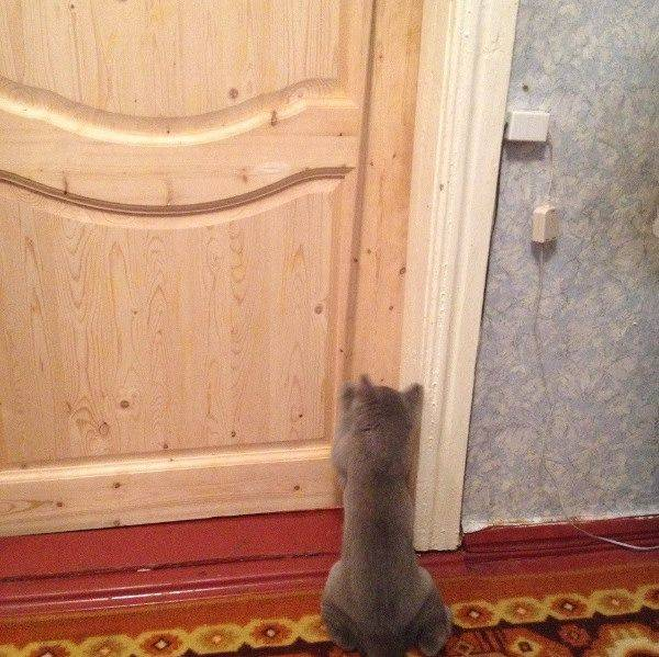 Как отучить кота открывать шкаф