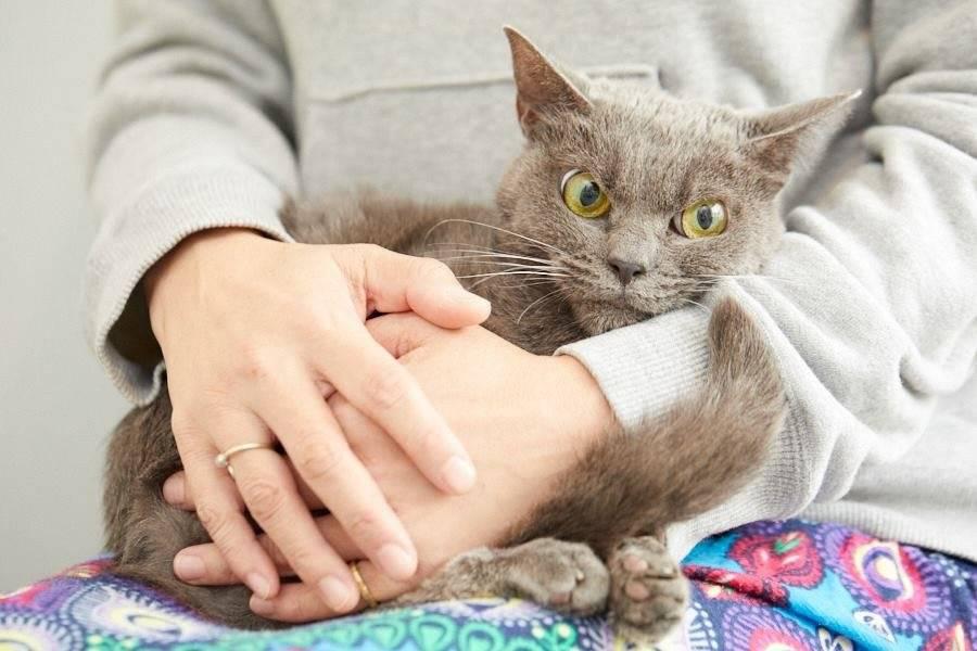 Как понять, что кот нездоров
