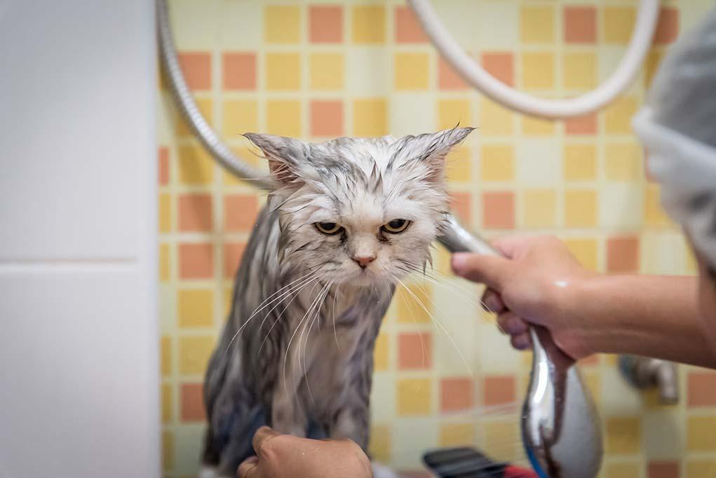 За что кошки любят ванны и раковины: 7 причин