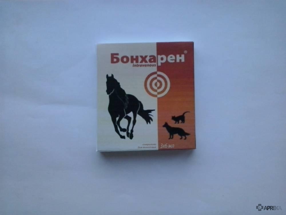 Бонхарен для собак: инструкция по применению, лечебный эффект и отзывы ветеринаров