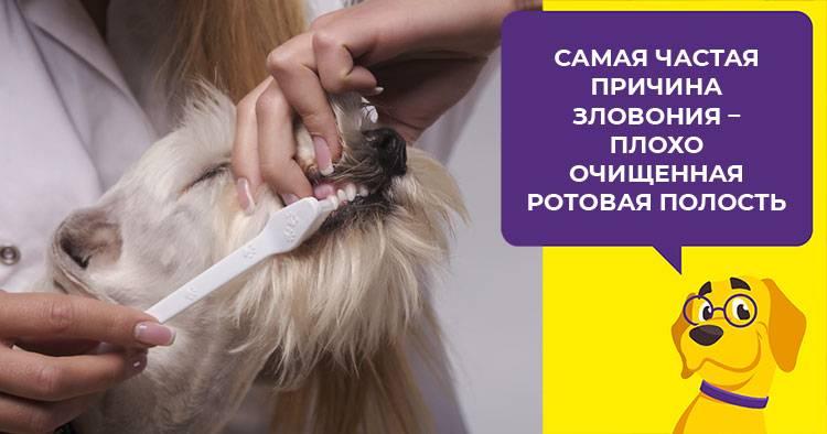 Плохой запах изо рта у кошки: с чем связан и как избавиться