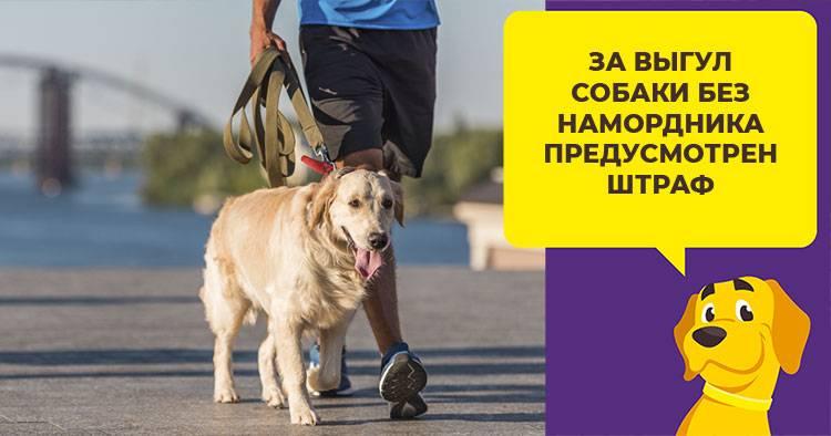 Можно ли привлечь хозяина собаки к ответственности, и за что именно – административные и уголовные наказания