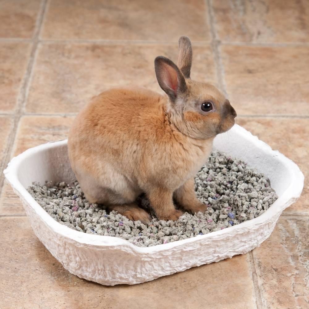 Как приучить кролика к лотку: выбираем туалет и наполнитель | кролик в доме | яндекс дзен