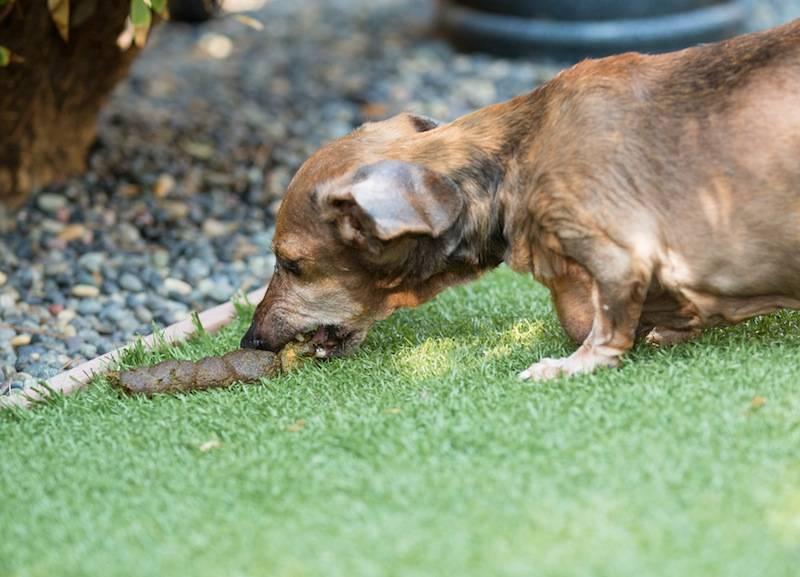 Как отучить собаку выть – скулить, в отсутствие хозяина, по ночам