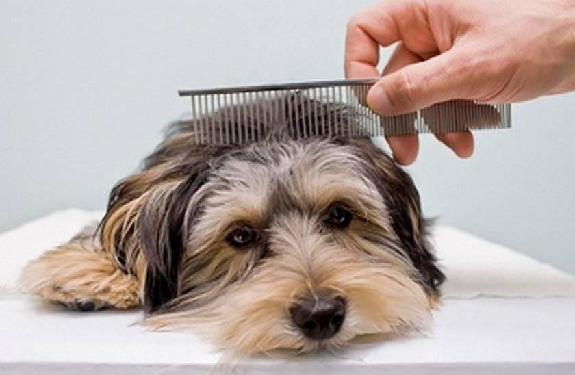 Уход за шерстью собаки: инструменты, средства, особенности ухода в домашних условиях